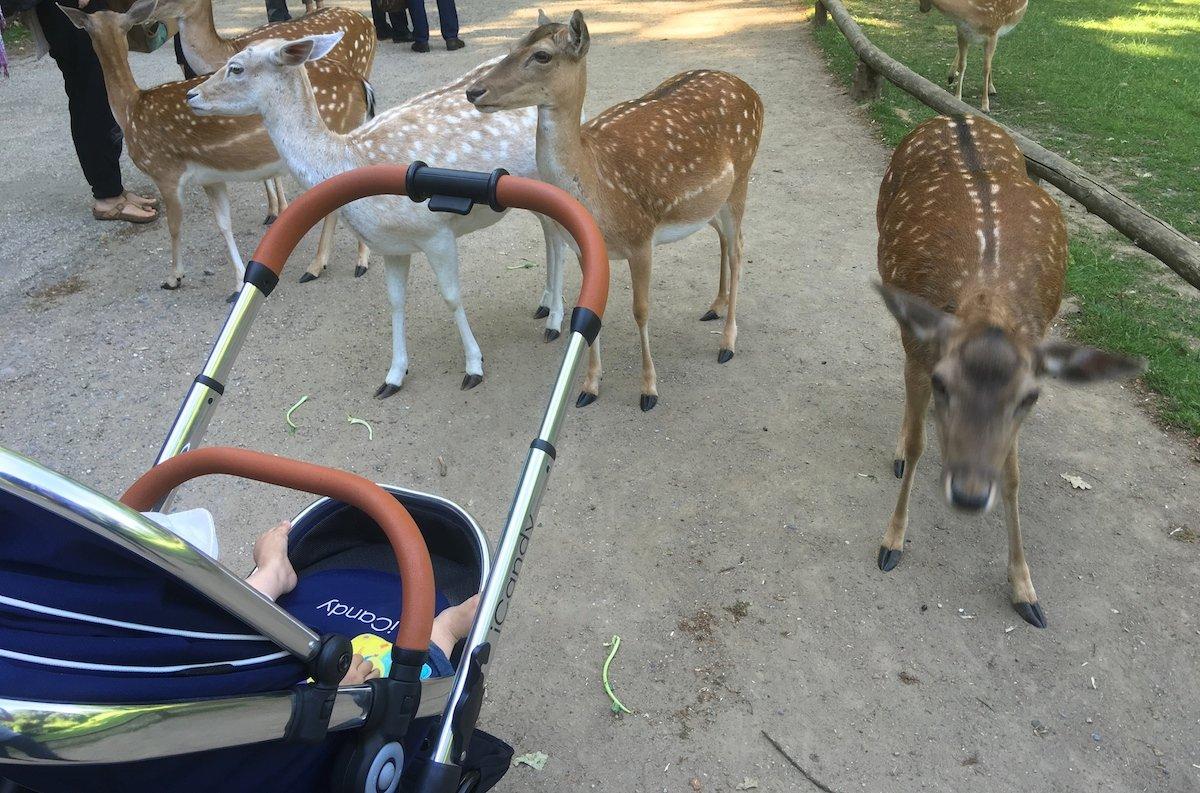 Reisetipps Düsseldorf mit Baby Tierpark