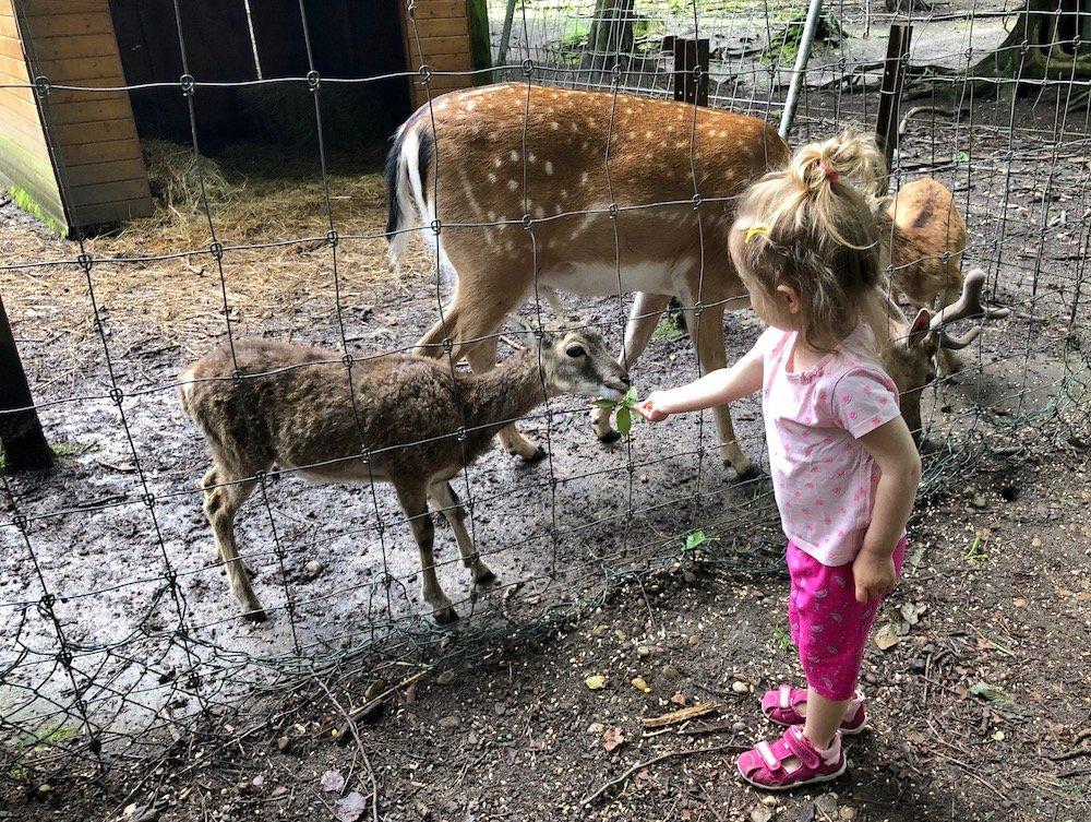 Sommer-Aktivitäten für Kinder Tiere kostenlos