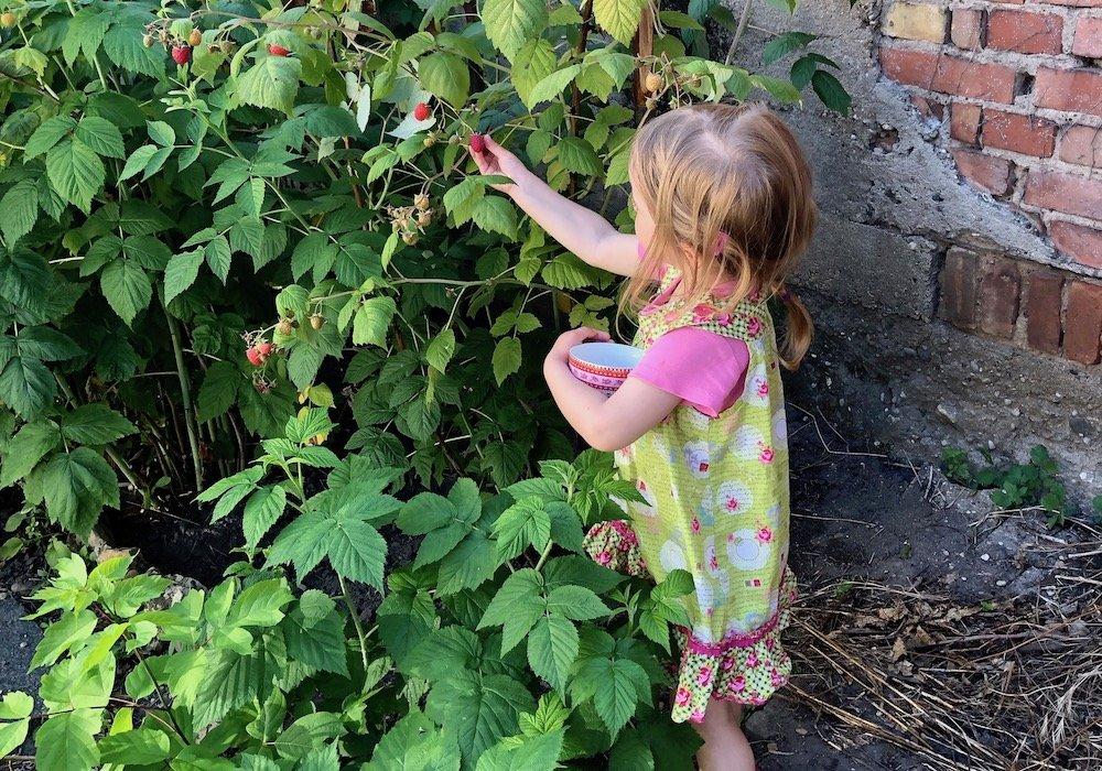 Sommer-Aktivitäten für Kinder Beeren