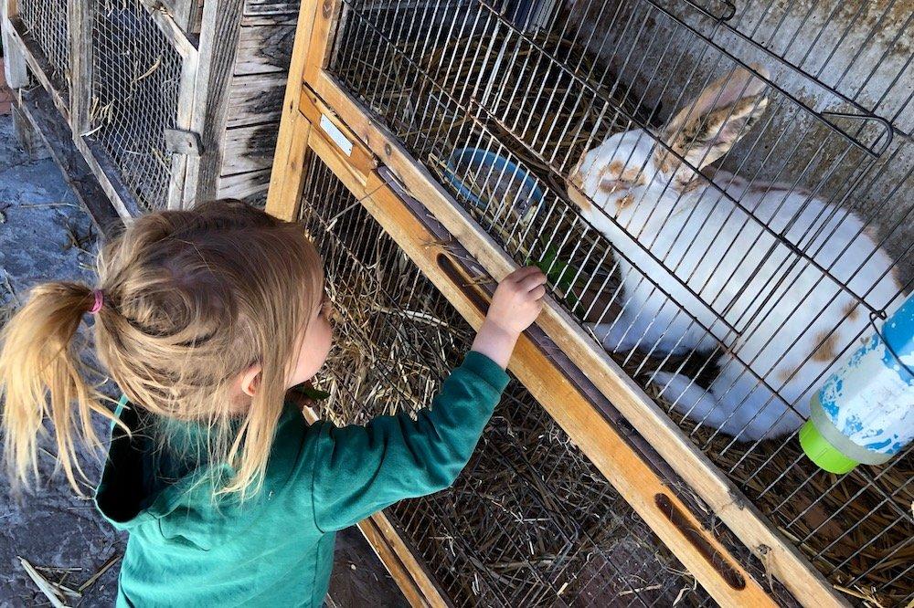 Schwarzwald mit Kindern Bauernhof